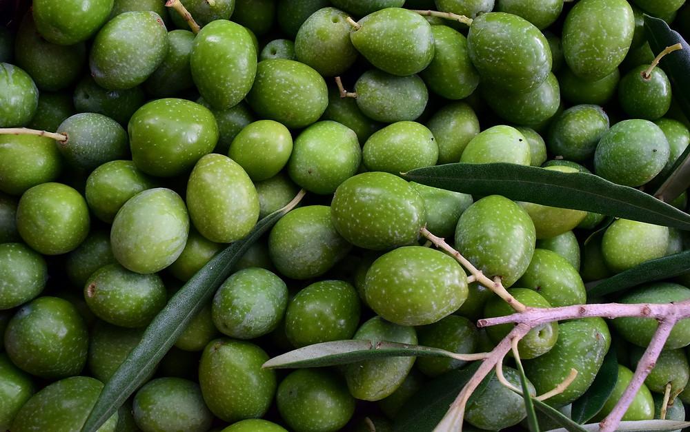 Olives recollides
