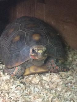 Martha the Tortoise