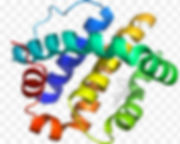 protein_edited.jpg