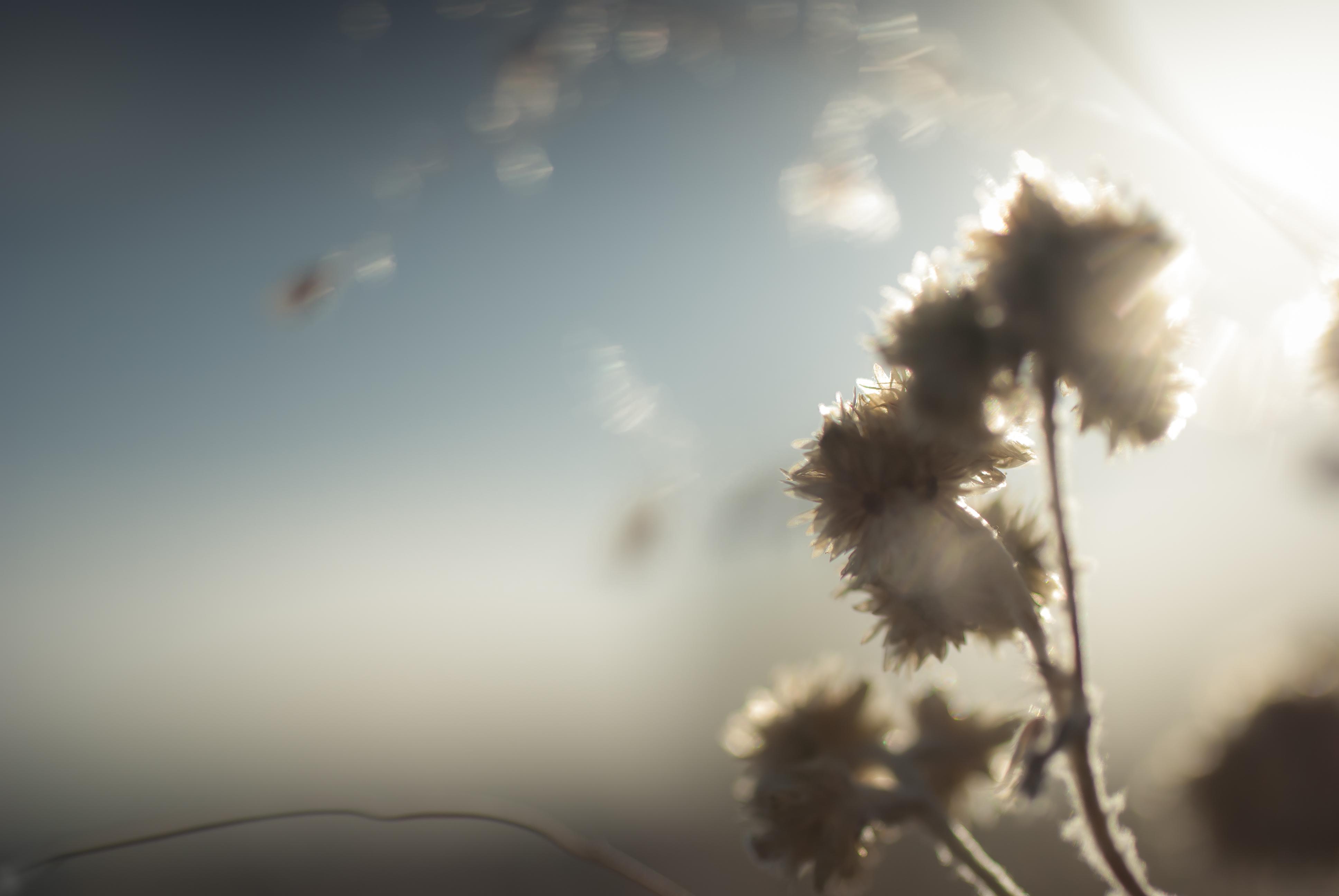Semillas y la Danza del Tiempo