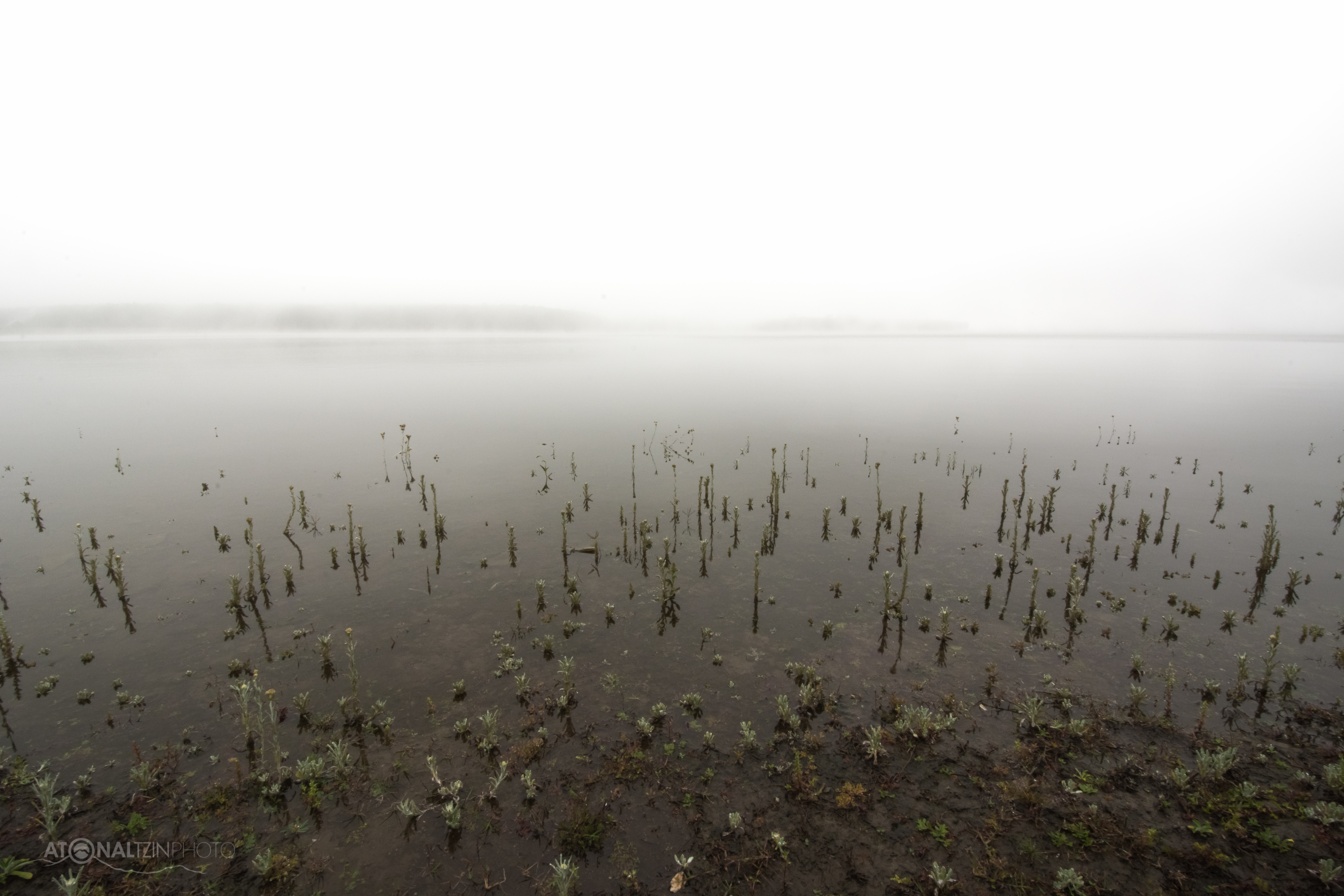 Espejo y niebla