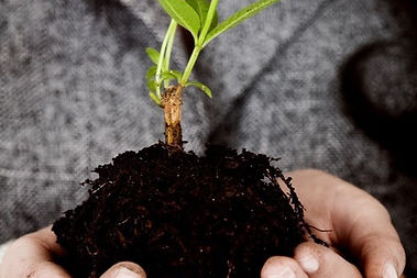 Woman holding a seedling in soil in the palms of her hands