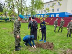 аллея славы русский лес.jpg