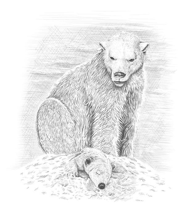 43 polar bear and cub 2 copy.jpg