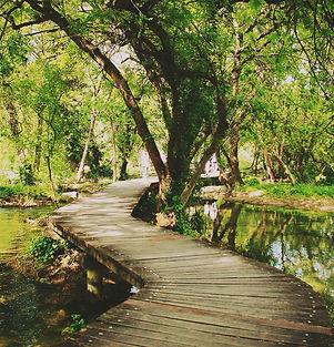 path tree water 1.jpg