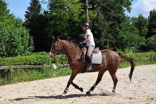 Cours d'équitation pleine nature - Initiation