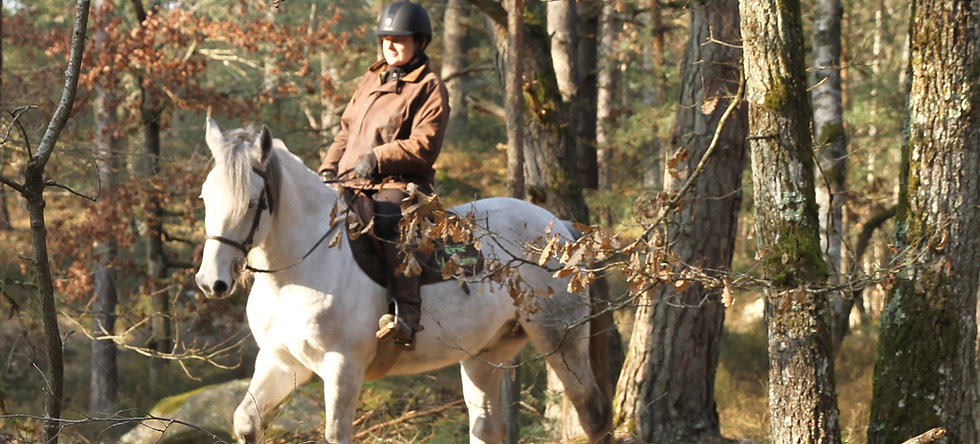 Balade à cheval - 2 heures