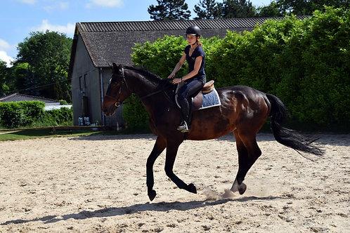 Demi journée cheval - équitation classique