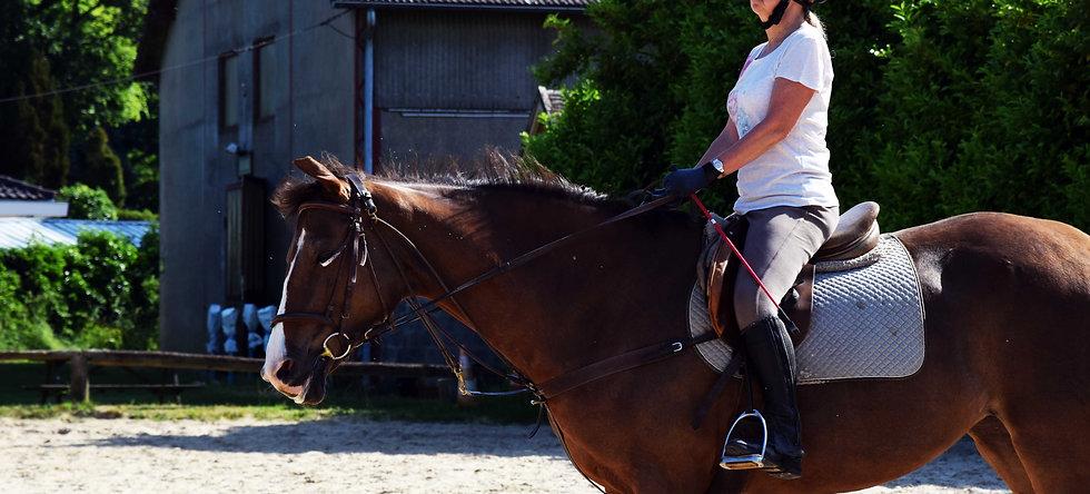 Le cheval en toute confiance