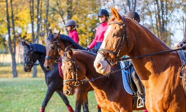 team bulding cheval