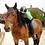 Thumbnail: Demi journée cheval - équitation classique