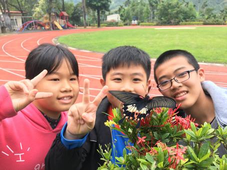 在鳳蝶幼蟲進入課堂之後~我的阿毛朋友