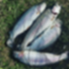 рыбаловный пруд в духанино с рыбой беседками зарыбленый