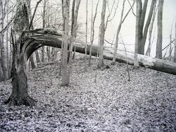 Tree Distortion