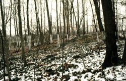 Wedge: Winter