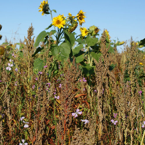YELLOW TIDE SEED MIX (8 KG ACRE PACK)