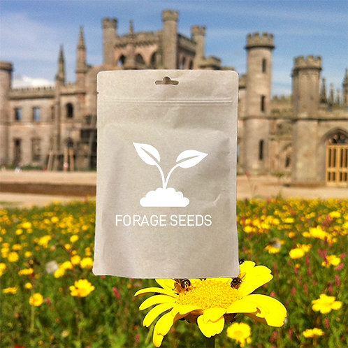 Eco Wildflower & Grass Seed Mix 80:20