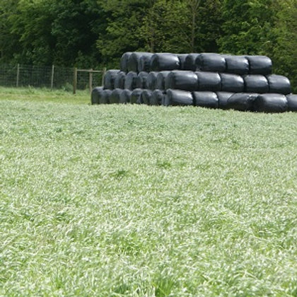 MULTI STRIKE GRASS SEED MIX (ACRE PACK)