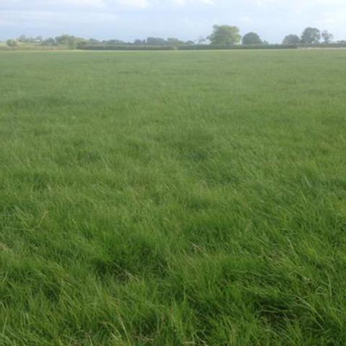 OVERSEEDER GRASS SEED MIX (ACRE PACK)