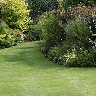 PREMIUM FRONT LAWN GRASS SEED MIX