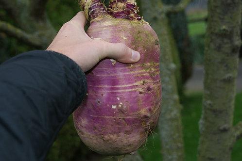 Frisia Stubble Turnip Seed (2kg per acre)