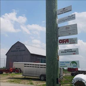 Rae Family Farms #19