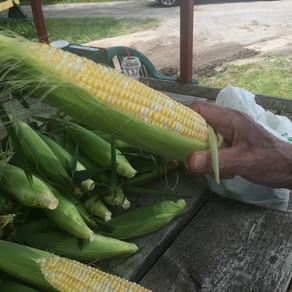 Sweet Sweet Corn