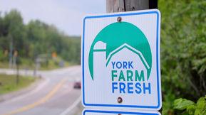 YFF Farm markets