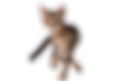 kitten-694918_960_720_edited.png