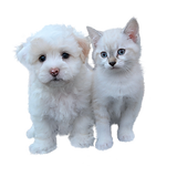 dog-and-cat-free-3484559_960_720.png