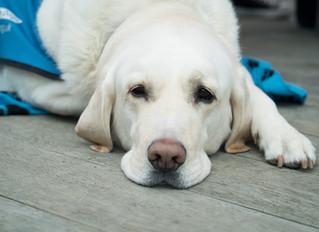 Mysteriöses Hundesterben. Rätsel