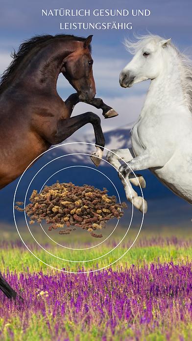 pferd reico3.png