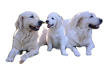 dogs-3122349_960_720_edited.png