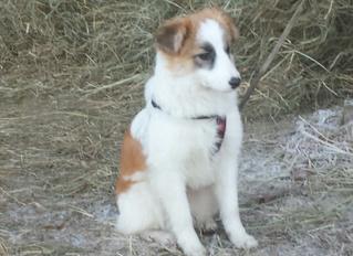 Nola - ein toller Hund aus Rumänien