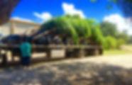 Cocos trailer.jpg