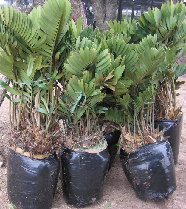 Cardboard palm