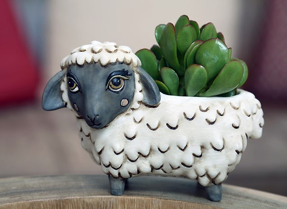 Baby black SHEEP Pla.
