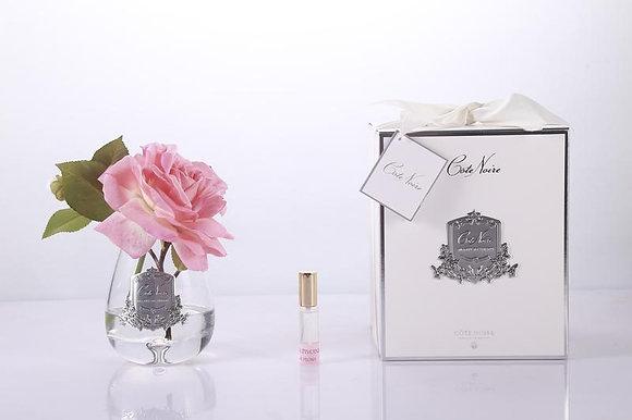 Tea Rose White Peach - Clear