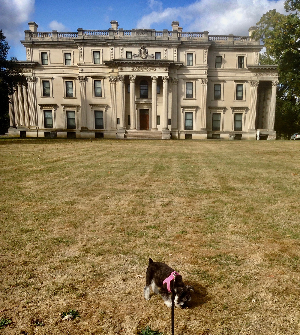 My dog Gracie loves the Vanderbilt Estate in Hyde Park. We've lived here for 10 years and have enjoyed every minute of country life and the exciting history that goes with it.