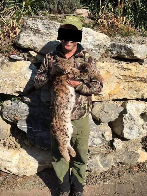 braconnage lynx.jpg