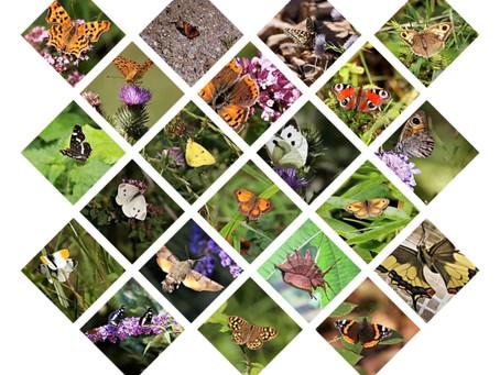 Printemps, Papillons ...