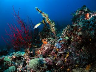 Mineração no fundo do oceano Pacífico preocupa ambientalistas por falta de regulamentação