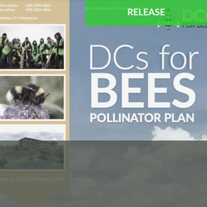 Host in Ireland Introduces World's First Pollinator Plan for Data Centre Industry