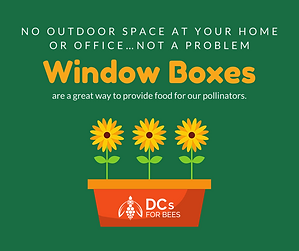 DCs for Bees_Social Card_Window Boxes.pn