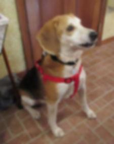 Dog Pet of the Week Windham 11-21-2019.j
