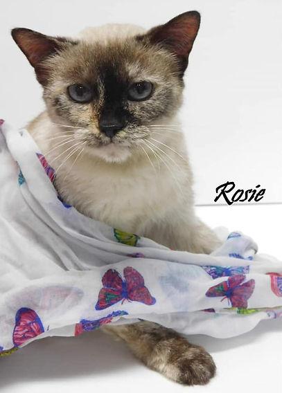 Cat of the Week Rosie 5-11-2021.jpg