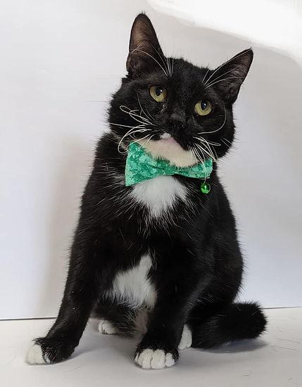 Cat - Niles - 10-19-2021.jpg