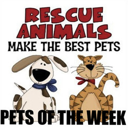 Pets of the Week!
