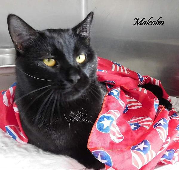 Cat of the Week - Malcom - 7-20-2021.jpg