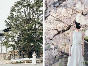 「六甲山サイレンスリゾート」の桜前撮り受付スタート